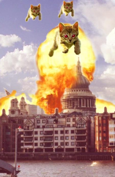cat_attack